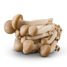 Specialty-Mushrooms_adobespark