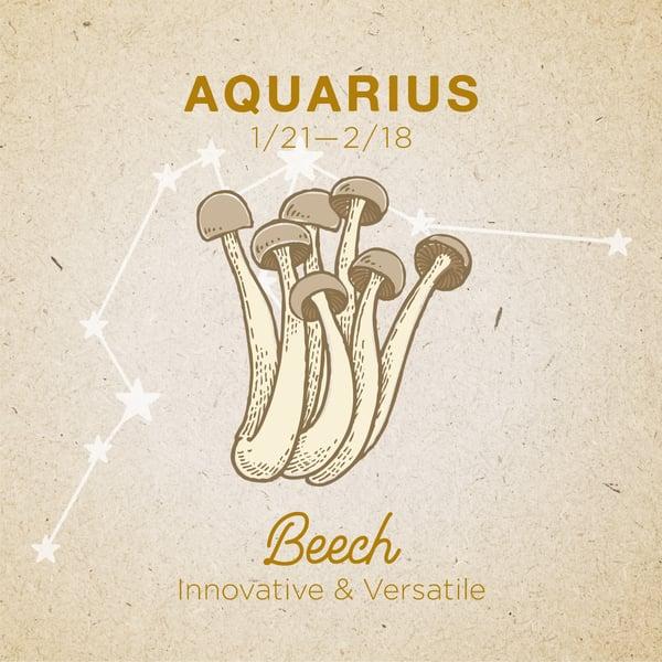 Aquarius-Beech