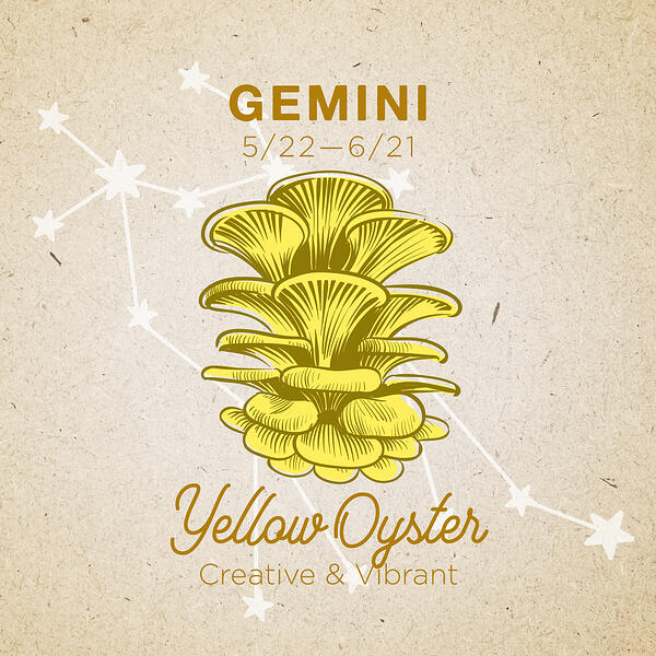 Gemini-YellowOyster