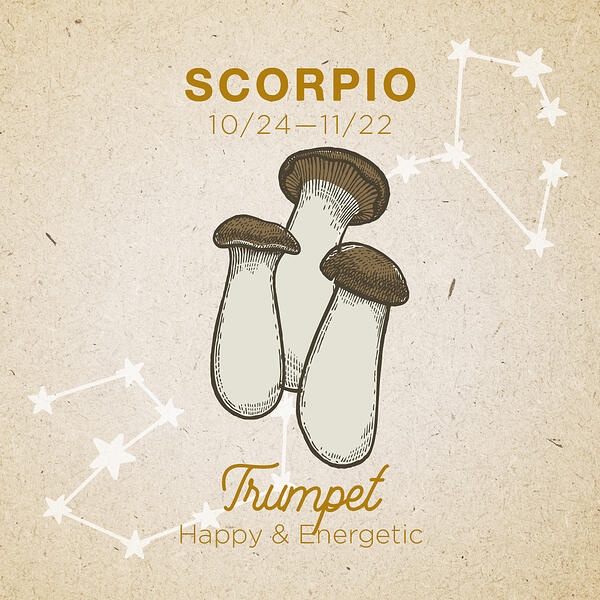 Scorpio-Trumpet-1