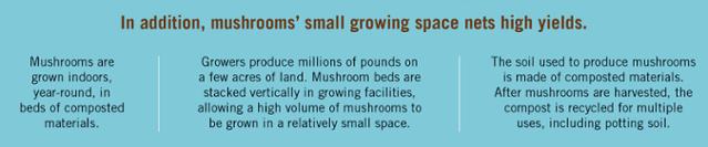Mushroom Sustainability