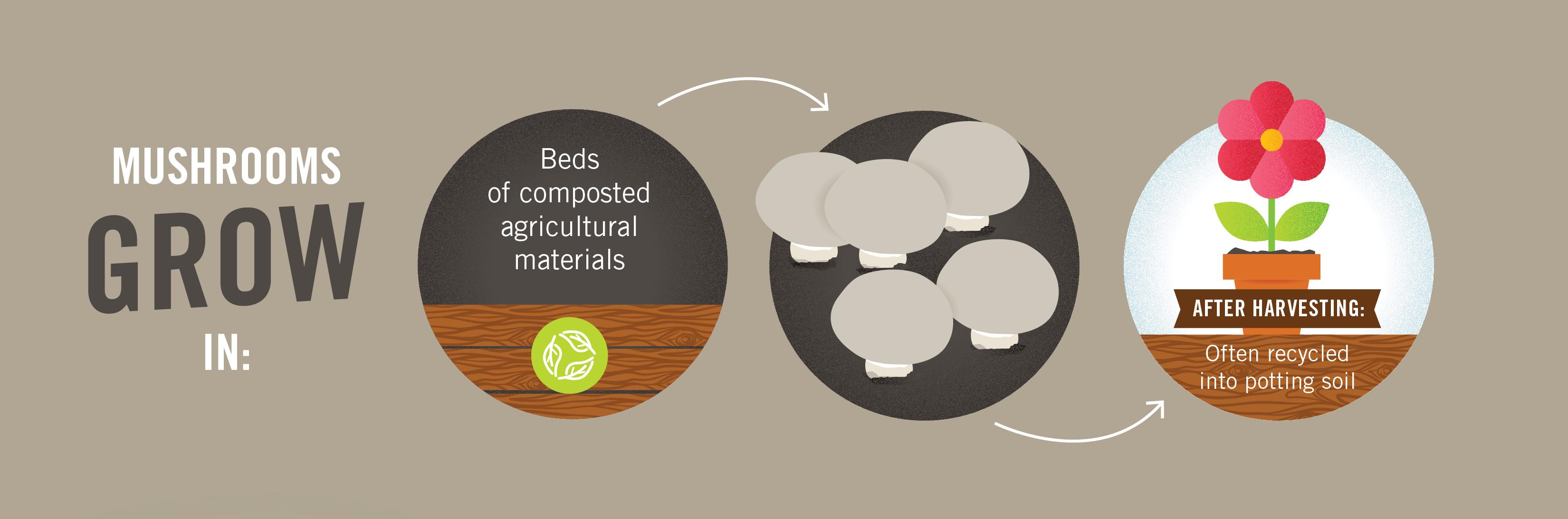 Mushroom Sustainability Story 11x17-02.png